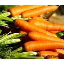 "Морковь сорт ""Без сердцевины"""