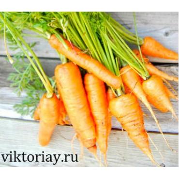 """Морковь сорт: """"Перфекция"""""""