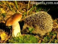 «Удивительная дружба в мире природы» 3-я серия