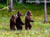 «Удивительная дружба в мире природы» 2-я серия