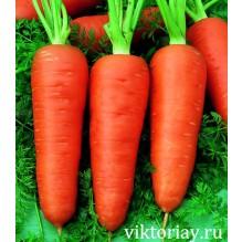 """Морковь """"АЛЕНКА"""""""