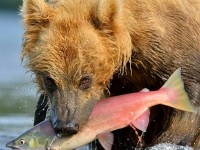 Приключения «Медведь»