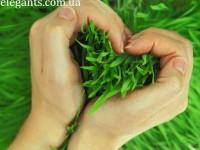 Газонная трава - сколько нужно
