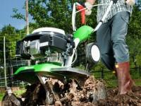 Як правильно садити дерева і чагарники восени?