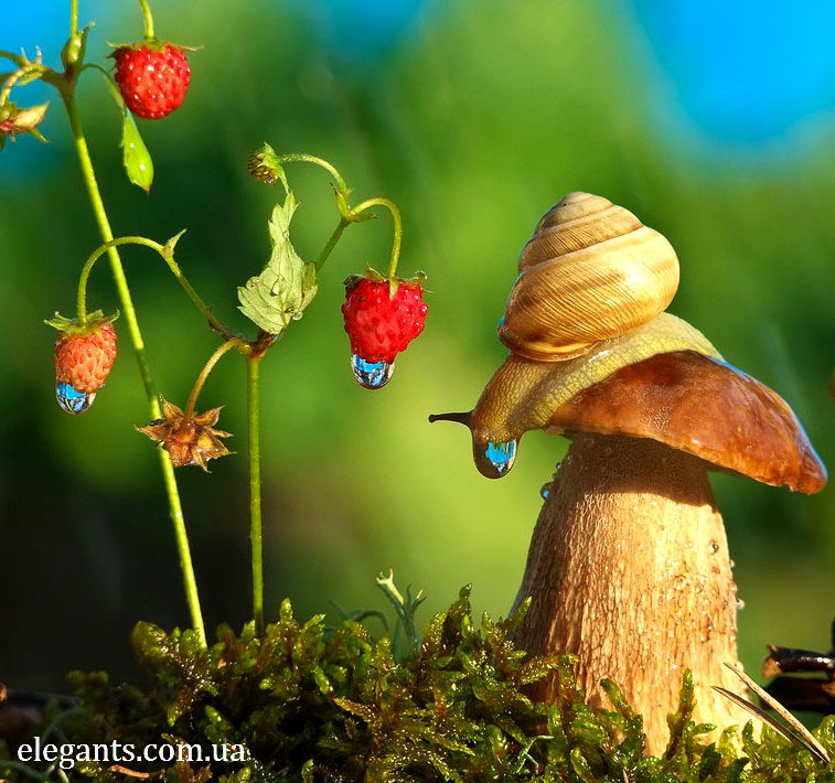 грибы,купить грибы,сушенные грибы,консервированые грибы,салат с грибами,рецепты с грибами,грибы фото,заказывайте гриба,купить онлайн белые грибы,курица с грибами,грибы в духовке,цветы,купить цветы,семена цветов,семена,семя,семю,купить семена,купить семян,семена почтой,арбуз,семена магазин,интернет семена,интернет семян,интернет магазин семян,куплю семена,каталог семена,каталог семян,капуста,учеба,среднее образование,внешкольная работа,виктория,клуб виктория,детско - юношеский центр,перец,сладкий перец,болгарский перец,морковь,семена моркови,полезные свойства моркови