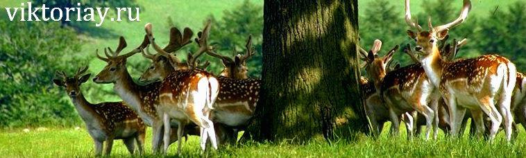 животный мир животных,животный мир,какой животный,видео животный,в мире животных,в мире природы,интересные последние новости на сегодня в мире природы,новости на сегодня в мире природы,последние новости на сегодня в мире природы