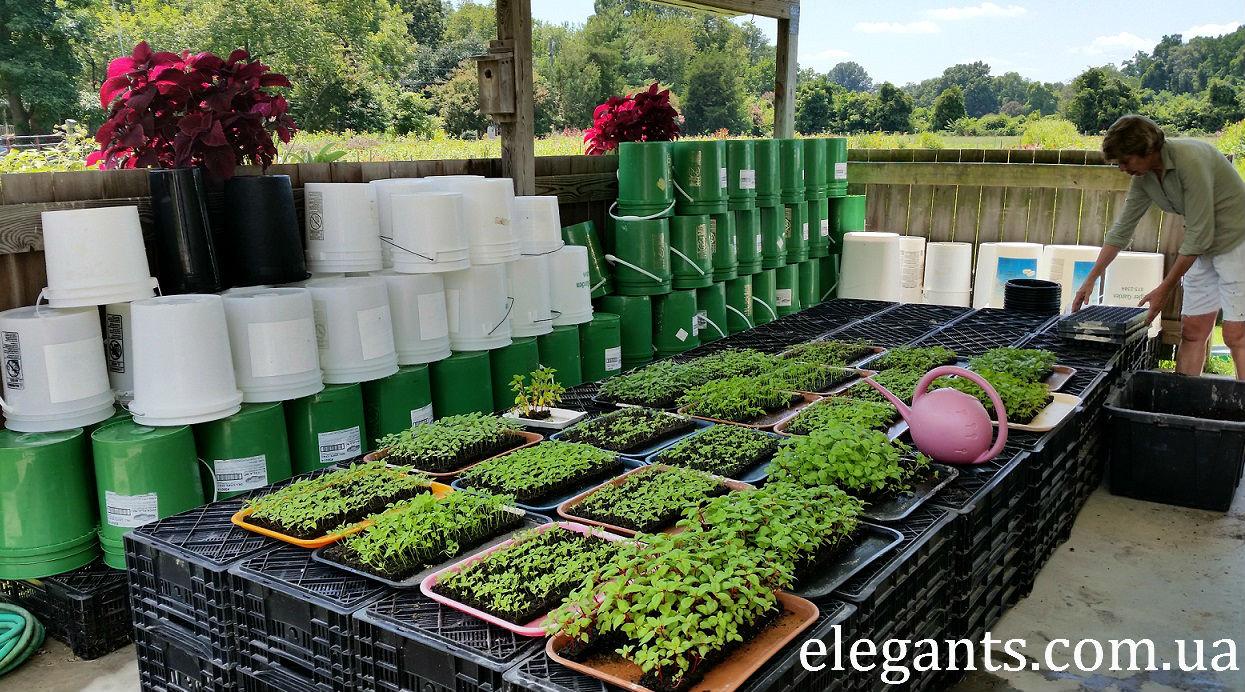 cеялка (дозатор) для точного посева семян, ТМ «Грин Бэлт»,выращивание растений и цветов,выращивание растений и цветов на продажу,выращивание цветов на продажу,цветы,купить цветы,семена цветов,семена,семя,семю,купить семена,купить семян,семена почтой,арбуз,семена магазин,интернет семена,интернет семян,интернет магазин семян,куплю семена,каталог семена,каталог семян,капуста,перец,сладкий перец,болгарский перец,морковь,семена моркови,полезные свойства моркови,грибы,купить грибы,сушенные грибы,консервированые грибы