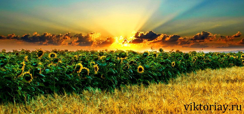 семена из швейцарии,семена из голландии и германии,семена голландские,семена из голландии цена,семена из голландии украина,семена из китая,семена из голландии цветов,семена из голландии оптом,семена из голландии в киеве,семена,семя,семю,купить семена,купить семян,семена почтой,арбуз,семена магазин,интернет семена,интернет семян,интернет магазин семян,куплю семена,каталог семена,каталог семян